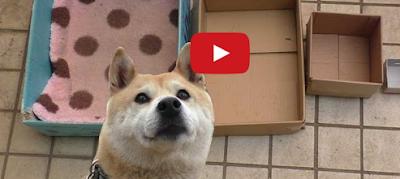 Собаки видео