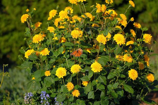Arte y jardiner a plantas perennes altas para la parte - Arriate plantas ...