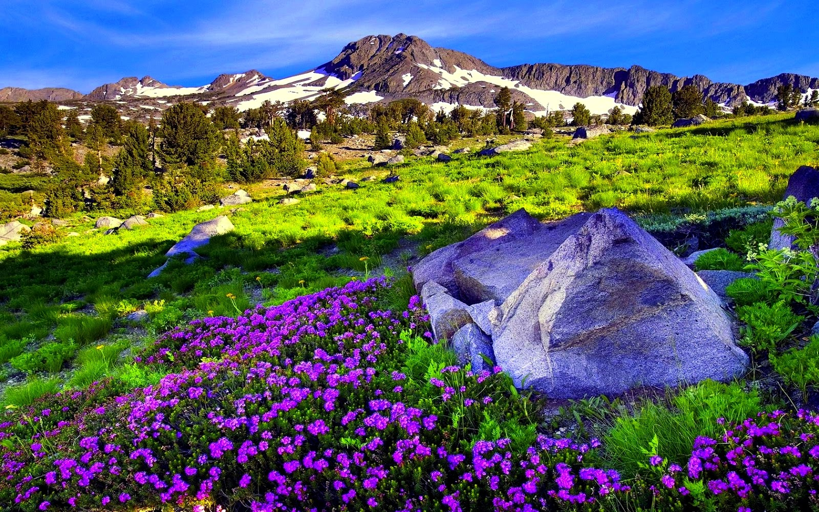 Imagini desktop primavara poze super misto for Immagini desktop primavera