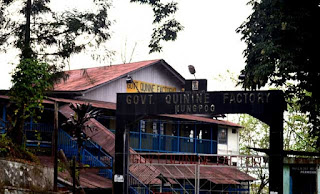 Mungpoo Quinine cinchona factory