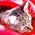 新品種! 貓臉玫瑰