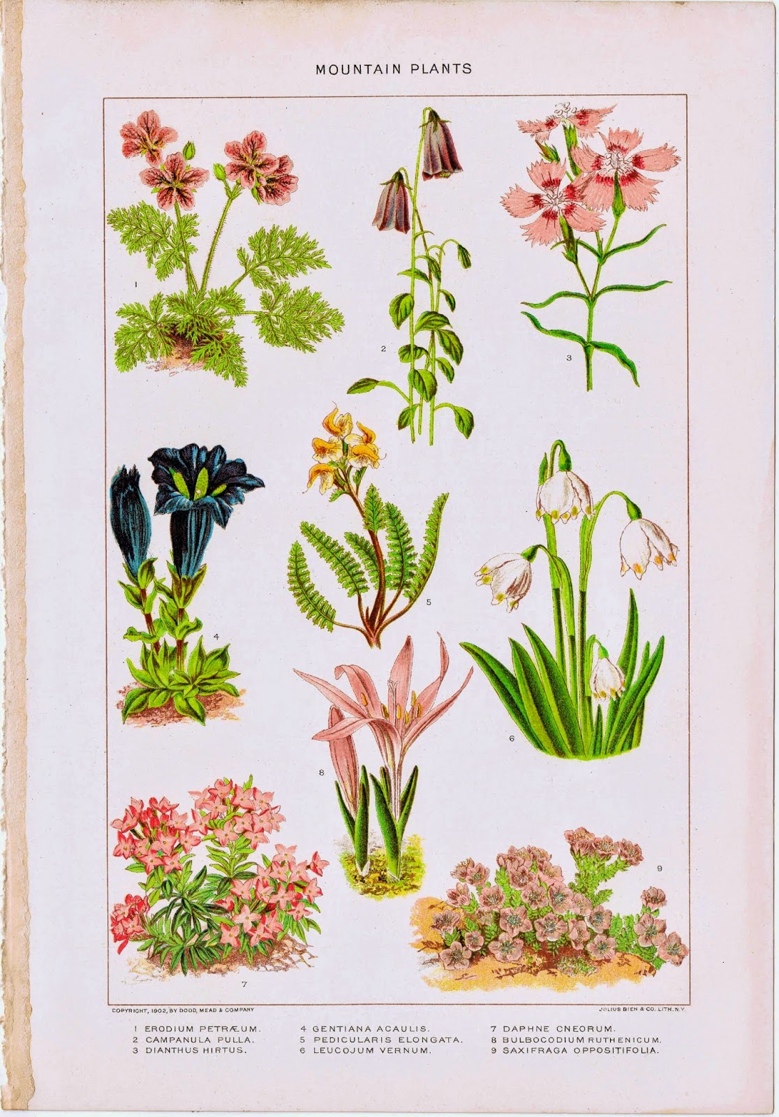 Antique Nature Flowers Printable via KnickofTimeInteriors.blogspot.com