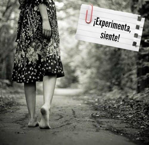 experimenta siente