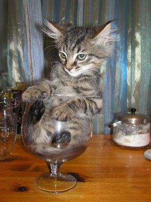 funny cat-10