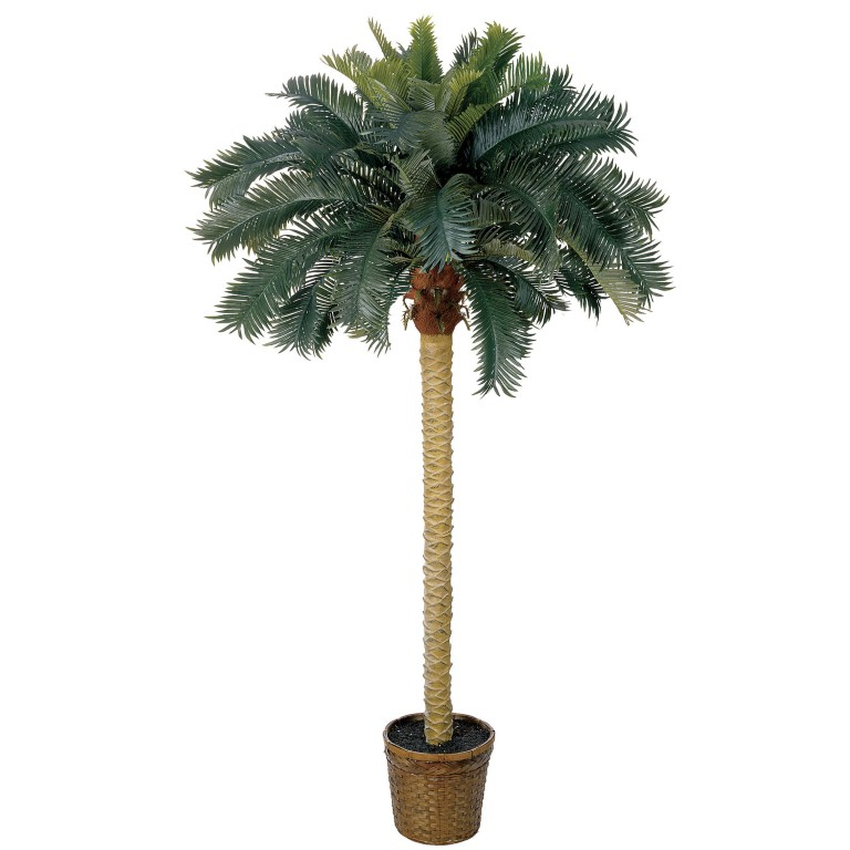 Quality Silk Plants Blog 5 Most Popular Artificial Palm