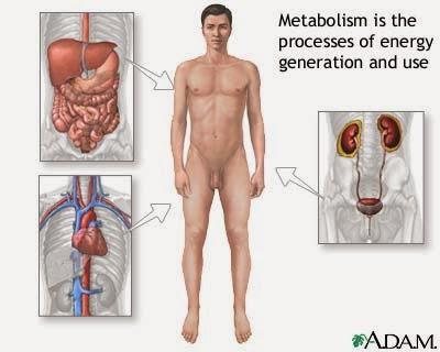 Makanan Yang Membantu Tingkatkan Metabolisme