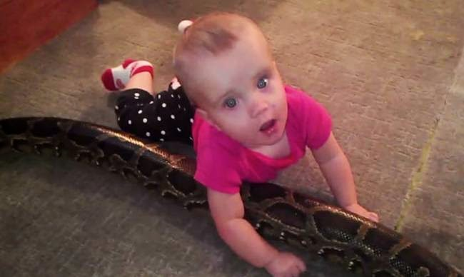 14-Month Old Baby Plays With Giant Python