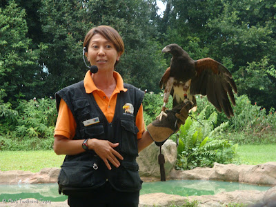 Jurong Bird Park - Kings of the Skies Show Photo 5