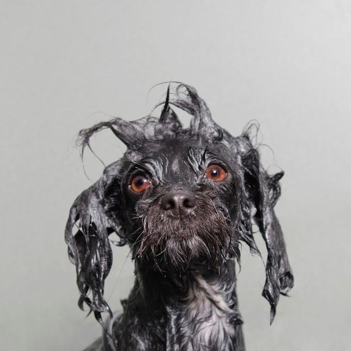 Wet_Dog_9.jpg