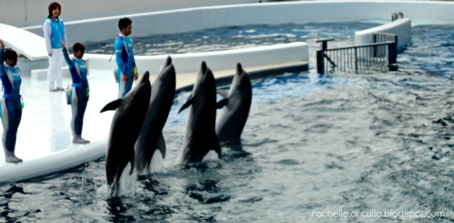 kyoto aquarium, dolpins, dolphin show