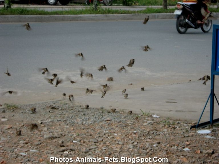Image sparrow