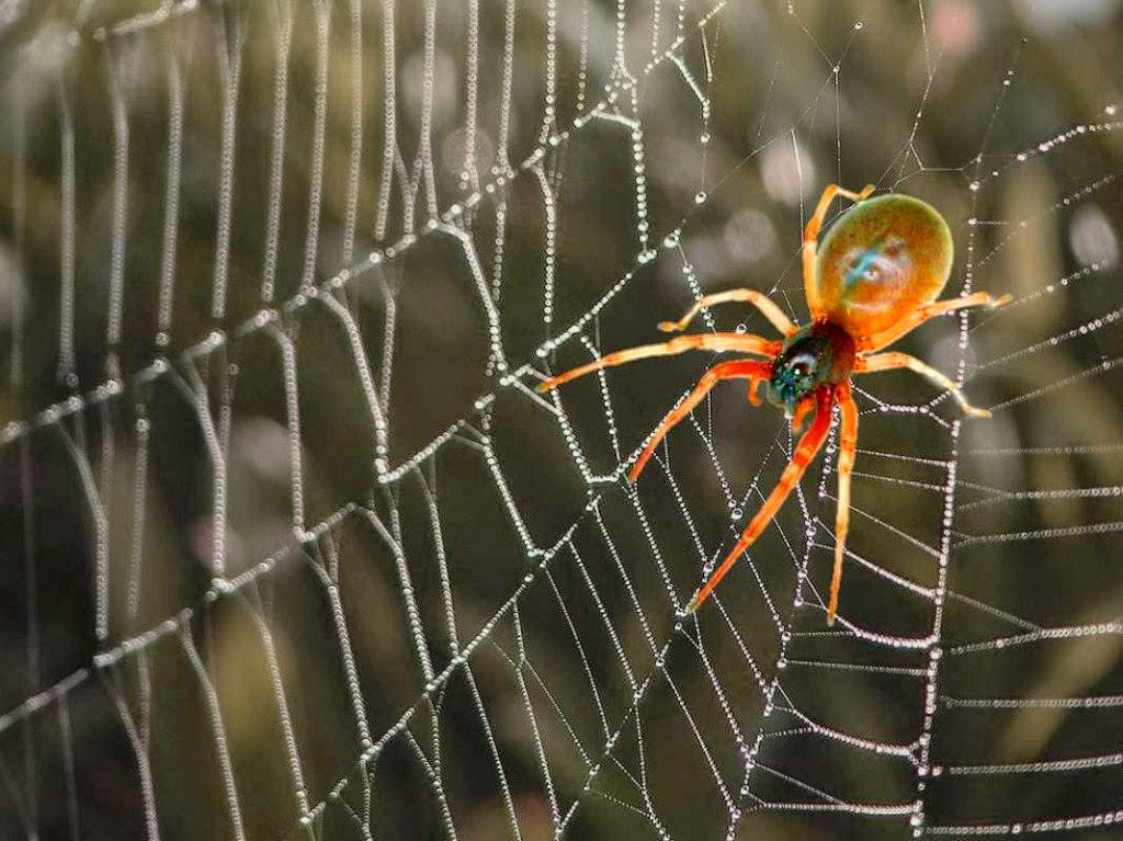 Del mito al miedo, pasando por la admiración, las arañas