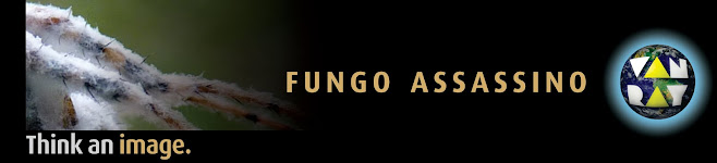fungo assassino van ray