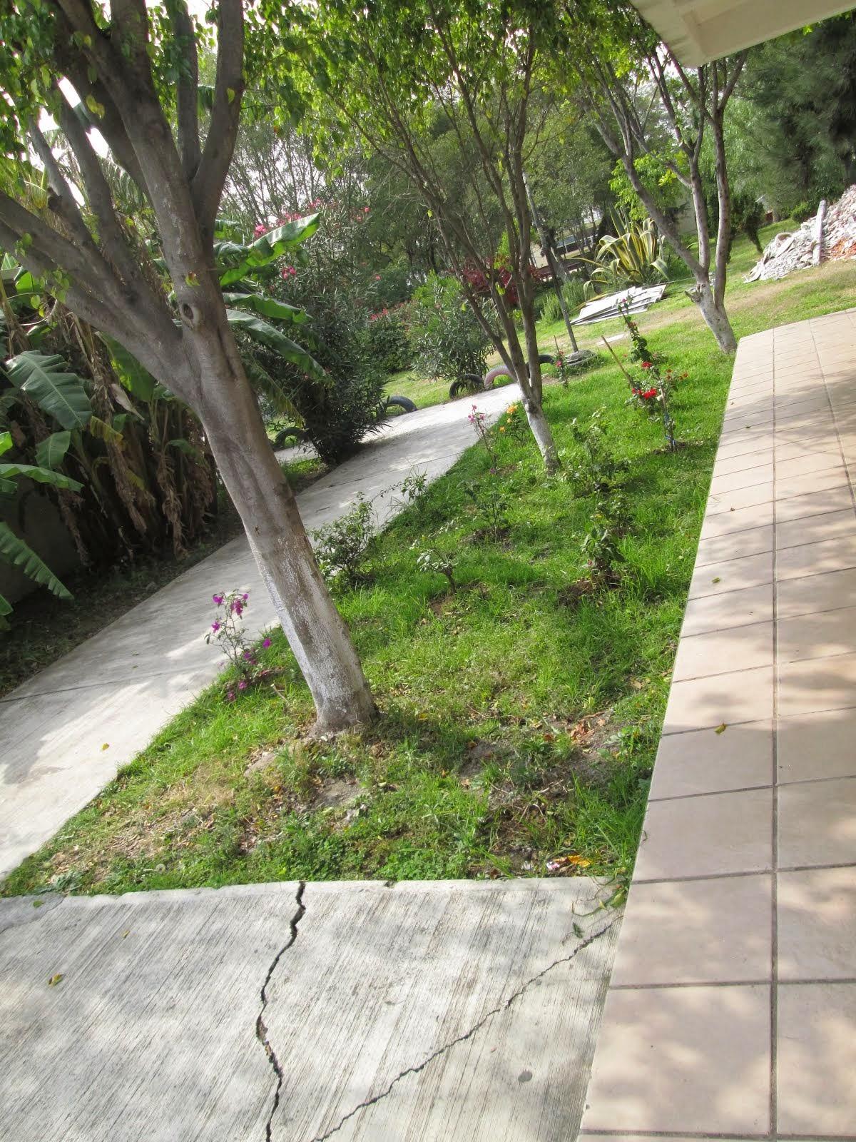Paseo de las bugambilias