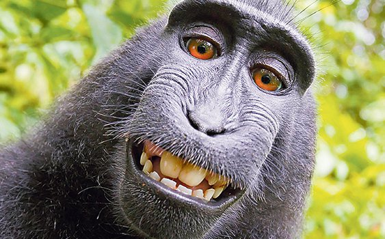 100 Maymun Deneyi Dahi Beyin