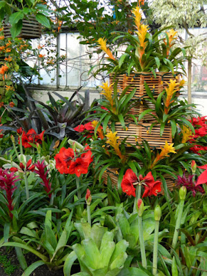 Allan Gardens Conservatory Christmas Flower Show 2015 amaryllis and bromeliads by garden muses-not another Toronto gardening blog