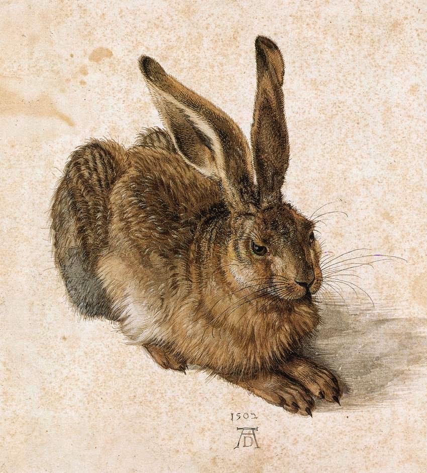 アルブレヒト・デューラーの画像 p1_34