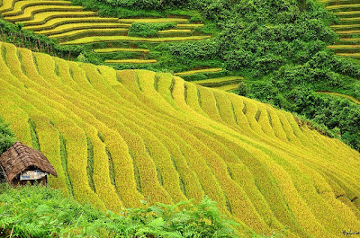Necessary tips when you travel to Sapa