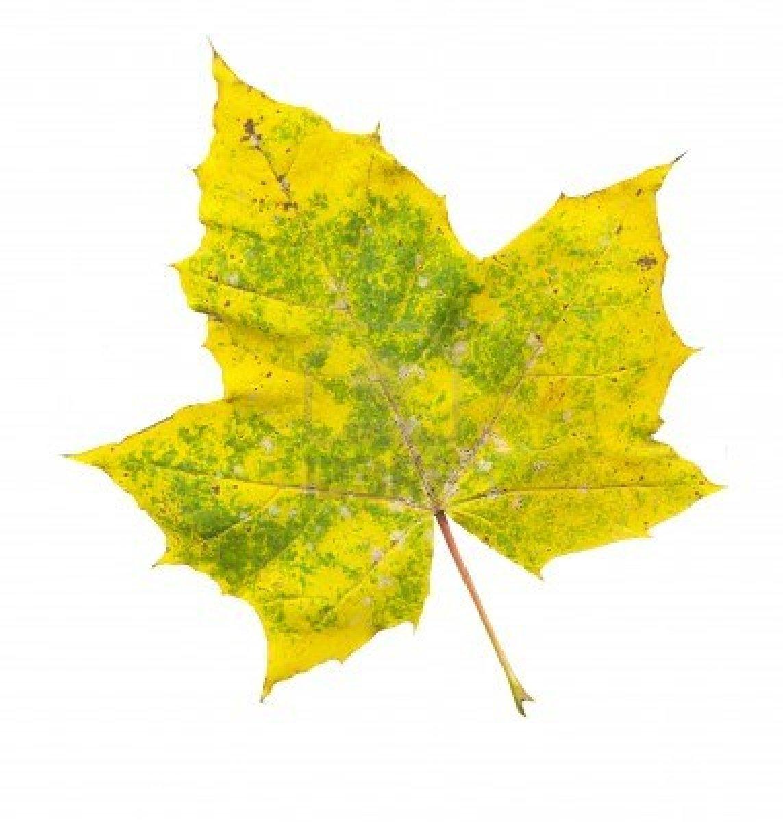 M todos de la ciencia enero 2013 - Color verde hoja ...