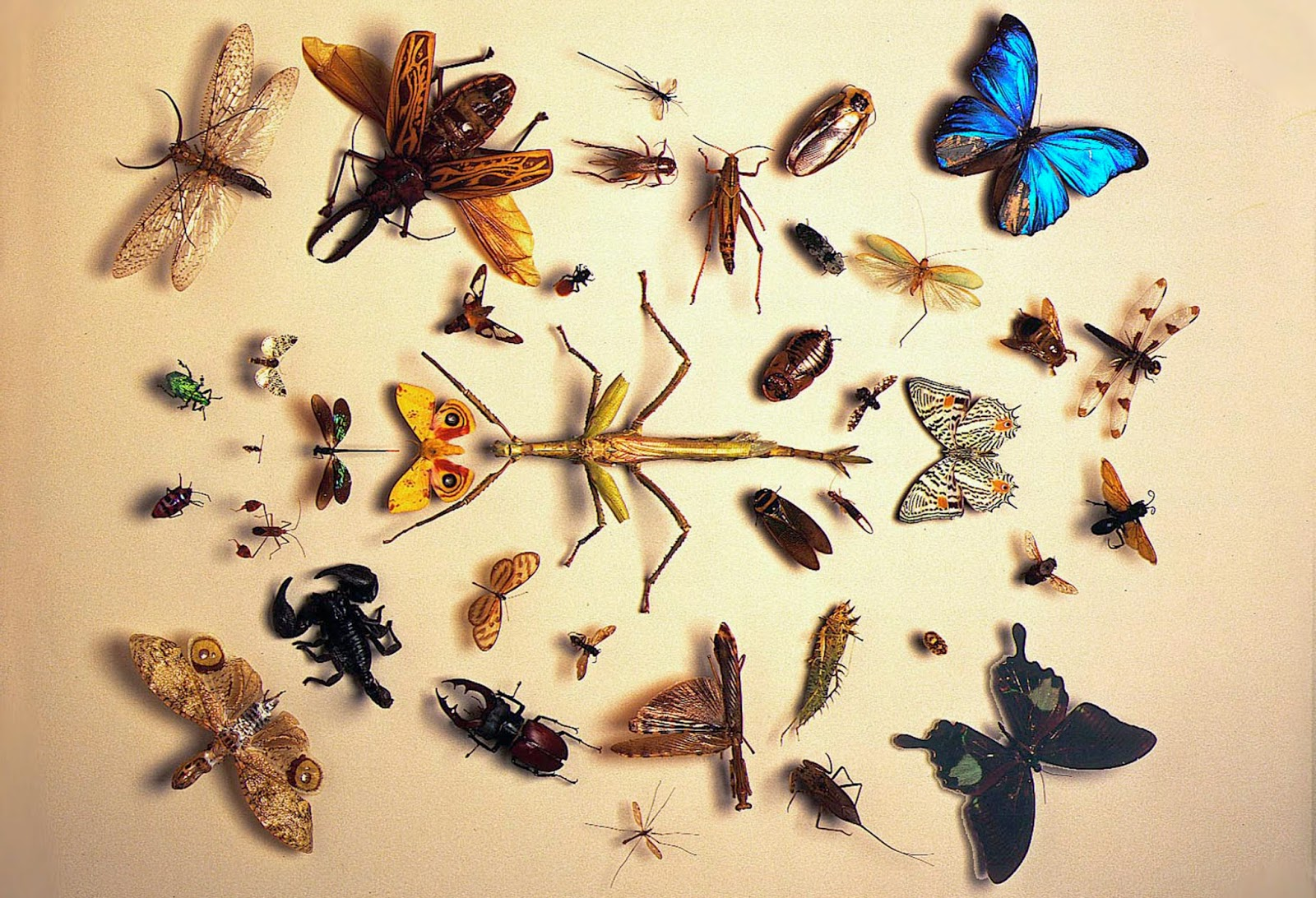 Insect Samples at display in the Invertebrate Zoology Division at American Natural History Museum (AMNH). Photo credit: AMNH