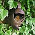 teiera di primavera: una casetta per gli uccellini
