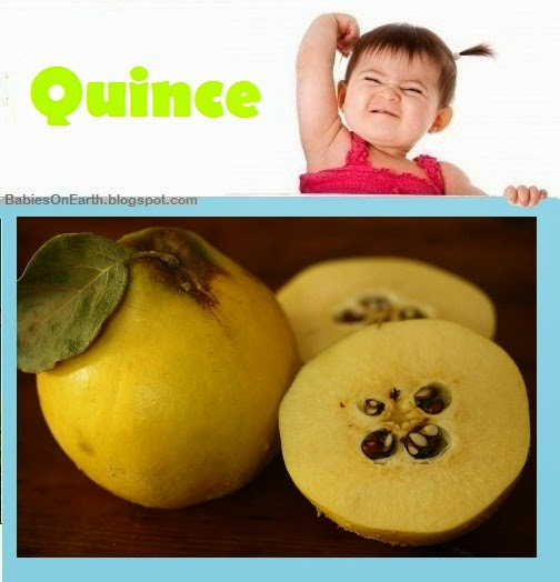 Baby Quince