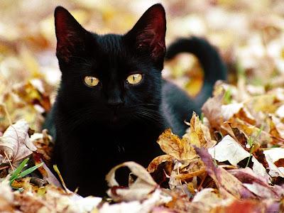 Amigurumi Gato Negro : Gato negro =^.^= arte friki