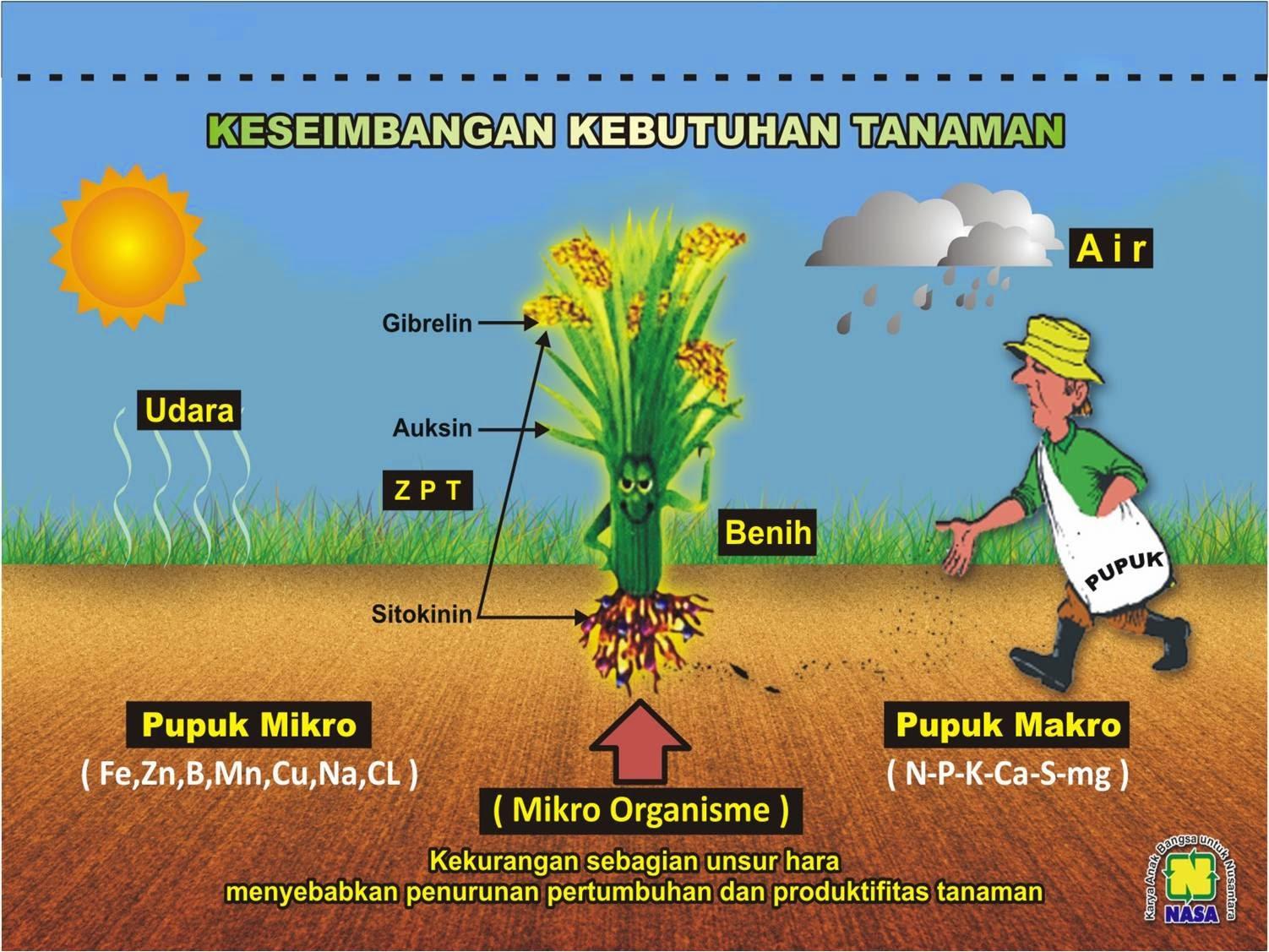kebutuhan-unsur-hara-tanaman-produk-nasa-supernasa-poc-nasa-hormonik-power-nutrition-distributor-resmi-stokist-online