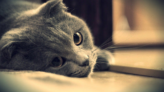 Gray Cat Eyes Close-Up HD Wallpaper