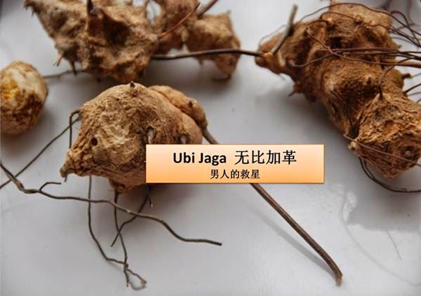 Image result for UBI JAGA