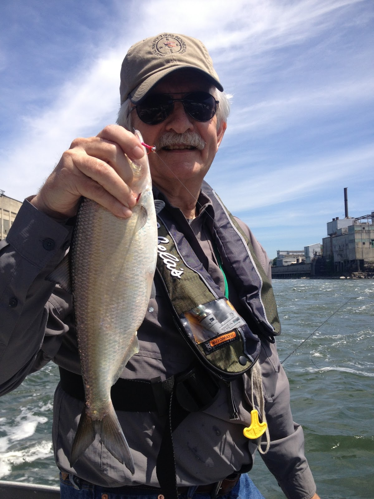 Fly fishing for shad the oregon tarpon water time for Fly fishing for tarpon