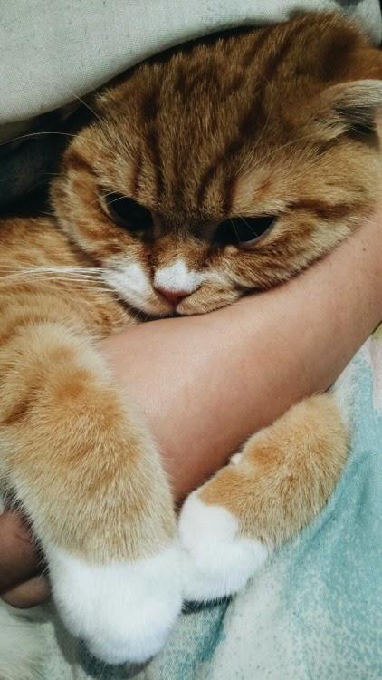 cure cat