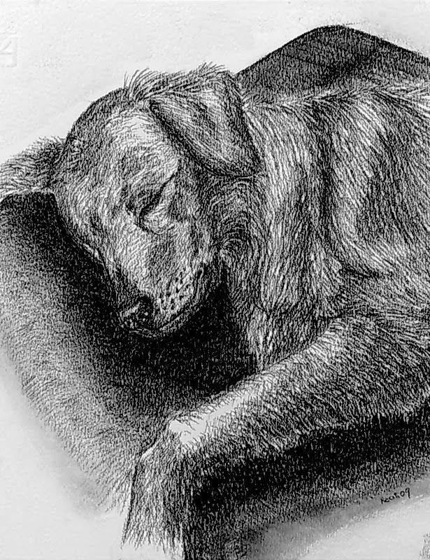 ritrratto shana che dorme cane carboncino derwent
