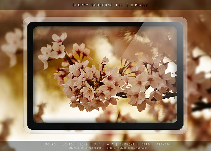 Wallpaper Cherry Blossom