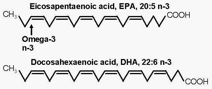 Los Acidos Grasos de ácidos Grasos en Los