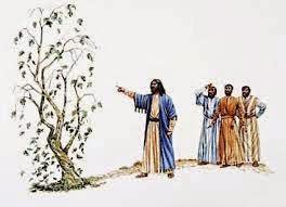 yesus tidak maha tahu, tidak tahu musim dan mengutuk pohon ara tak bersalah