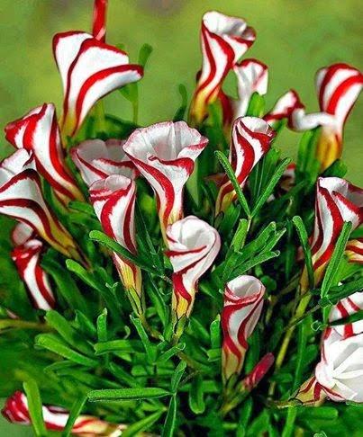 Cele mai frumoase flori pt tine download