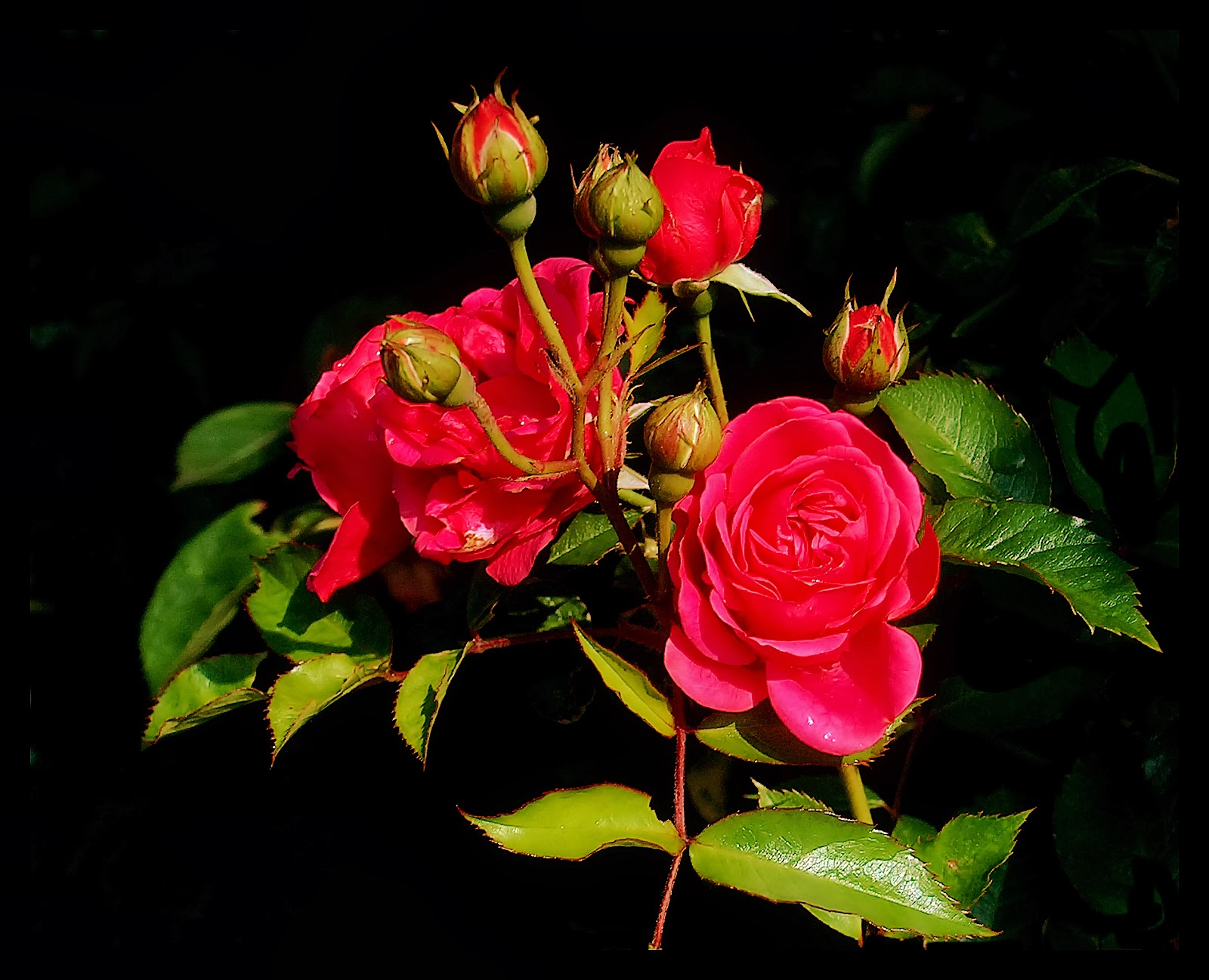 oneimirate.blogspot: mind blowing hd red rose wallpaper