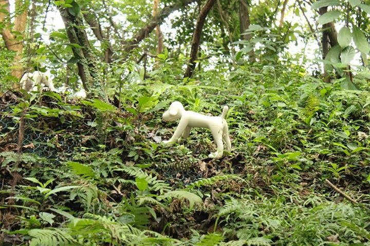 Where Nara S Quot Dogs Quot Are Quot Running Quot In The Wild Lol