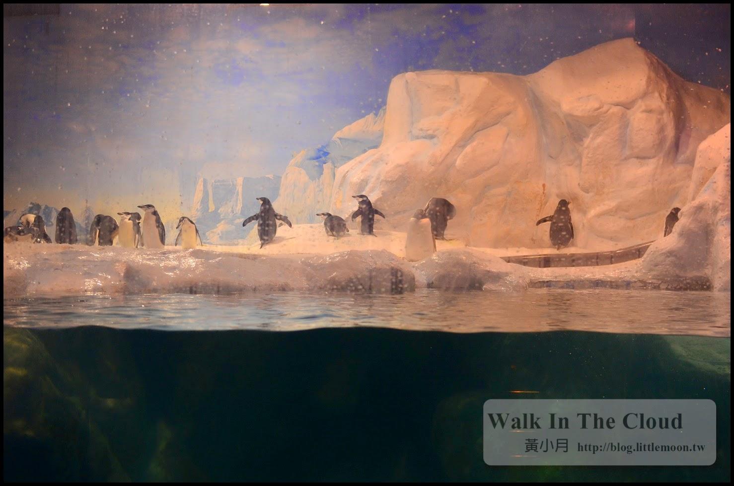 企鵝排排站