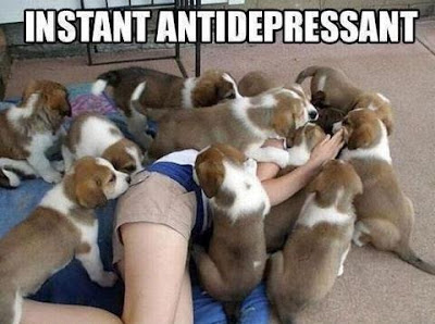 Instant Antidepressant. Girl in a pile of cute puppies.