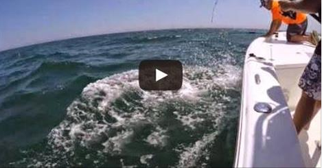 Amazing videos fish fly girl fishing charters may 19th for Fly girl fishing charters