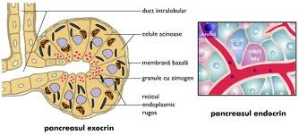 pancreasul endocrin