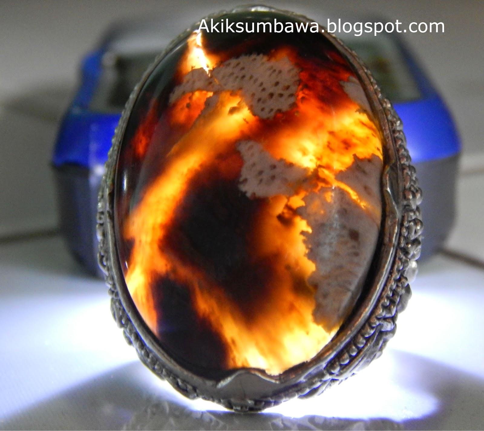 Batu Cincin Fosil Kelor