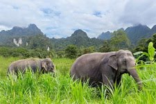 Elefanti (Pinterest–319 foto)
