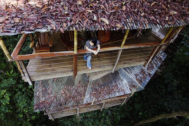 xenodoxeio dentrospita 5 Finca Bellavista: Ένα χωριό γεμάτο δεντρόσπιτα