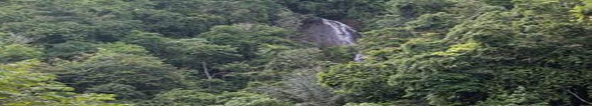 """""""Green Community  Xploring Club"""" Bukit Lawang JungleTrip"""