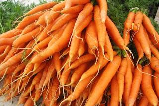 teknik budidaya cara menanam wortel yang baik bagus benar di pot polybag halaman rumah dataran rendah
