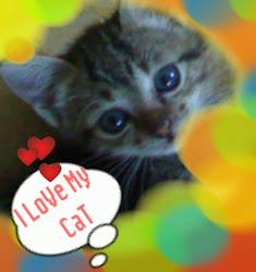 Kucing keSayangan Ku