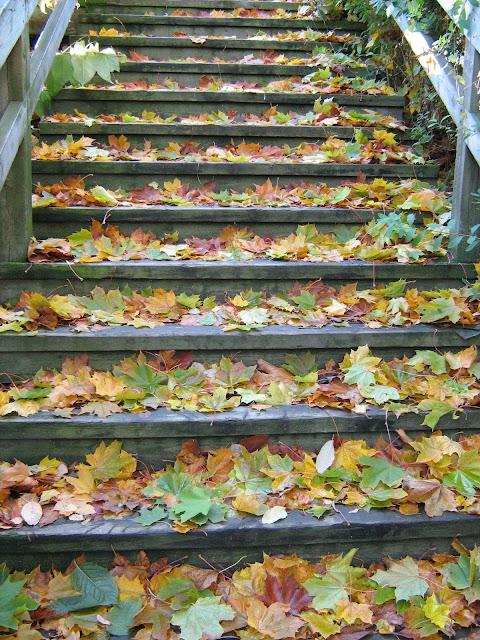 vaahteranlehdet syksyllä